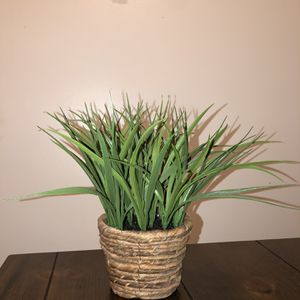 Artificial Plant for Sale in Redlands, CA