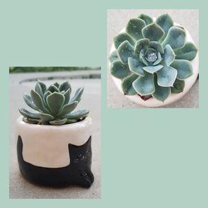 Succulent in cat pot for Sale in Brea, CA