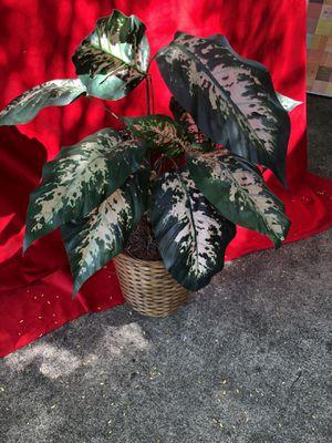 Silk plant for Sale in Miami, FL