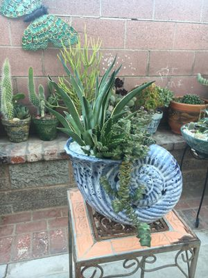 Ceraramic Shellf with agave Cactus and succulent for Sale in Fontana, CA