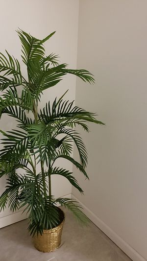 Beautiful plant for Sale in Macomb, MI