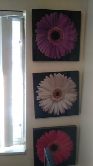 Daisy pictures for Sale for sale  Englewood, CO