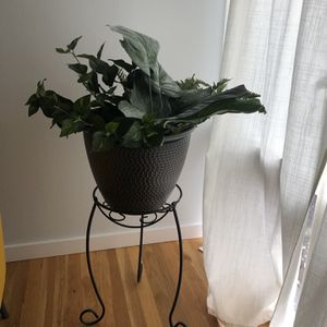 Fake plant + plant stand for Sale in Bellevue, WA