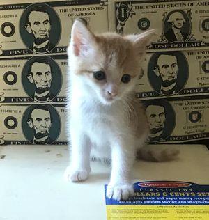 Kitties 6 weeks old for Sale in Fullerton, CA