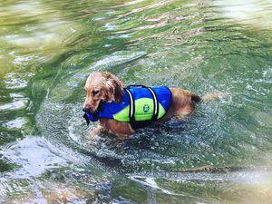 Awesome dog life jacket or life vest for Sale in Nashville, TN