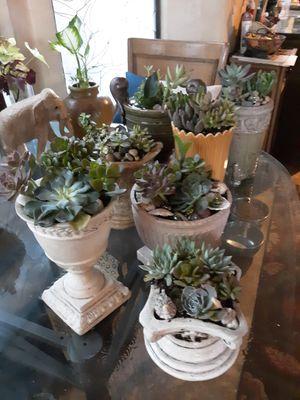 Beautiful live succulent planters for Sale in Chandler, AZ