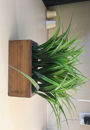 Fake plant for Sale in Enumclaw, WA