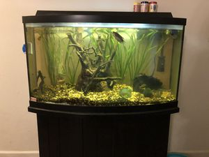 38 gallon live planted Bow Front tank with fish for Sale in Springfield, OR