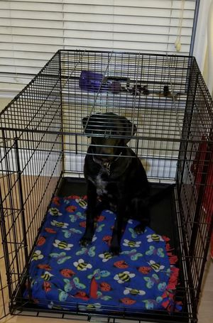 Dog cage/kennel for Sale in Baltimore, MD