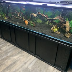 Fish Tank 300gal for Sale in Lynwood, CA