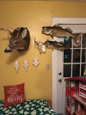 Taxidermy for Sale in Perry, OH