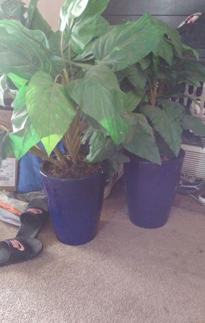 2 big fake plants in very nice heavy glass pots for Sale in Belleville, MI