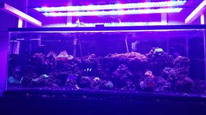 65 gallon Saltwater Tank for Sale in Los Angeles, CA