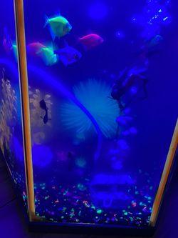 Glo Fish Fish Tank Aquarium for Sale in Vallejo,  CA