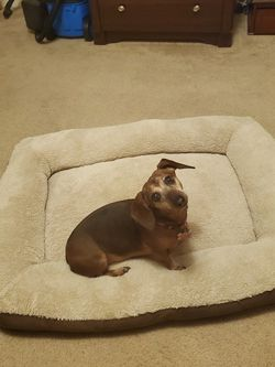 Large Dog Bed for Sale in Pittsburgh,  PA