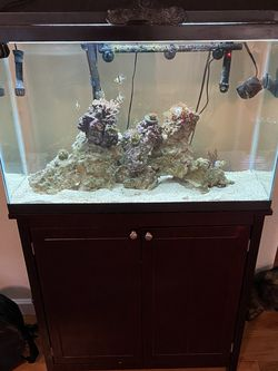 29 Gallon Tank And Stand for Sale in San Jose,  CA