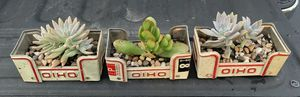 Succulent Planters for Sale in Lewis Center, OH