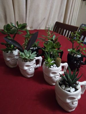 Succulents en calaveritas de cerámica pequeños$5EACH for Sale in Cudahy, CA
