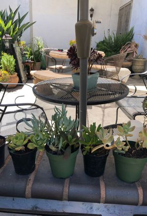 Succulent plants for Sale in Fremont, CA