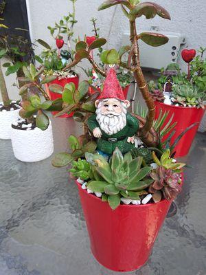Succulents en cubeta rroja de ❤ corazones for Sale in Bell, CA