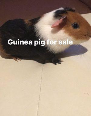 Freee for Sale in Hayward, CA