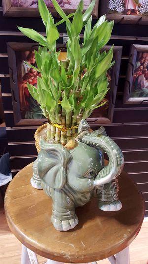 Bamboo plant for Sale in Atlanta, GA