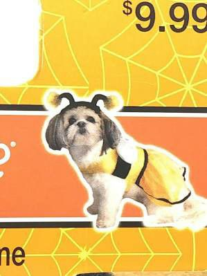 Size medium bubble bee pet costume for Sale in Hawthorne, CA