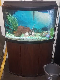 36 Gallon Fish Tank W/ Stand - Bowfront Aquarium for Sale in Chandler,  AZ