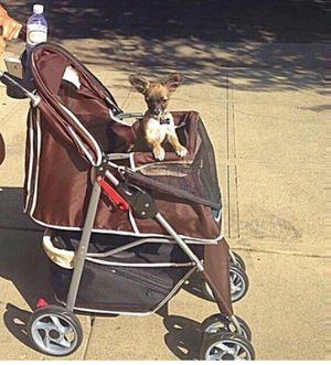 Dog stroller (not the dog) for Sale in Los Angeles, CA