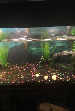 10 gallon fish tank for Sale in Sour Lake, TX