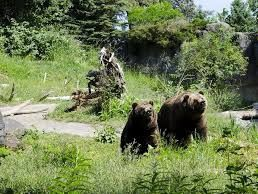 Woodland Park Zoo for Sale in Everett,  WA
