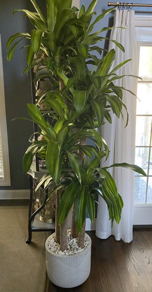 Real tree 7' tall for Sale in Murfreesboro, TN