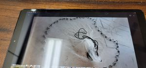 Cast net.from 4 feet up 8 feet for Sale in Peoria, AZ