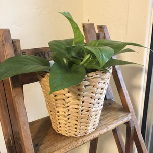 Plant Holder Braided Wicker for Sale in Carlsbad, CA