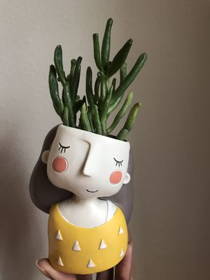Ceramic planter with succulent for Sale in Houston, TX