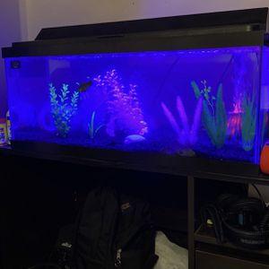 20 Gallon Freshwater Aquarium for Sale in Calabasas, CA
