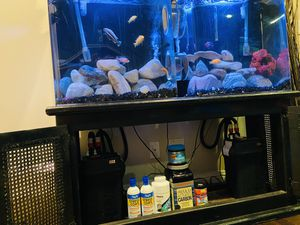 Fluval 306 Canister Filter for Sale in Hawthorne, CA