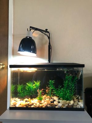Aquatic tank with cover for Sale in Hayward, CA