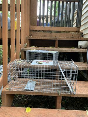 Mouse Trap for Sale in Lynnwood, WA