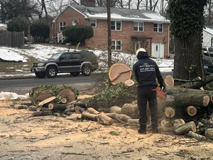 FREE WOOD!!! for Sale in Springfield, VA