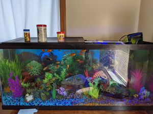55 gallon fish tank everything included for Sale in Hartford, CT