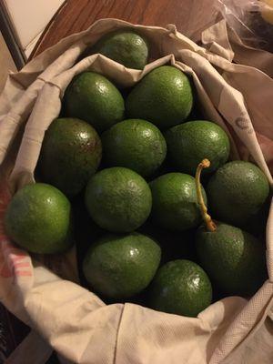 Avocados for Sale in Pico Rivera, CA