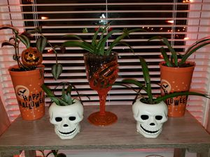 Halloween plants for Sale in Coplay, PA