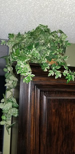 Fake plant for Sale in Saginaw, TX