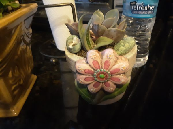 Such a cute little succulent in a stone flower pot with shells