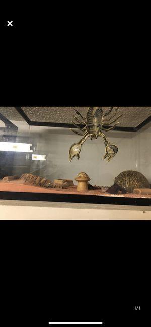 Aquarium / terrarium for Sale in Roebuck, SC