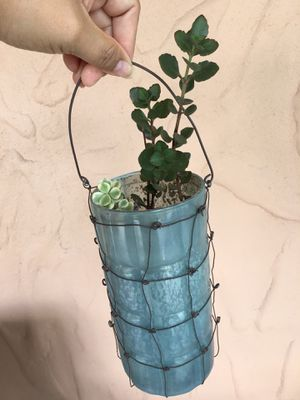 Real plant with cute pot for Sale in Ocoee, FL