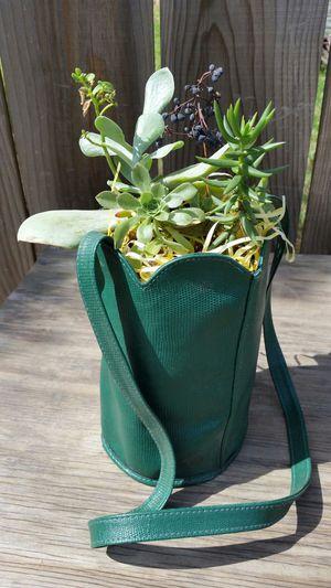Succulent Plant Arrangement for Sale in Clovis, CA