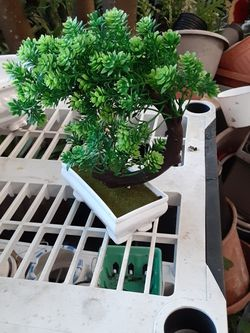 Artificial Bonsai Plant In Pot for Sale in Fort Lauderdale,  FL