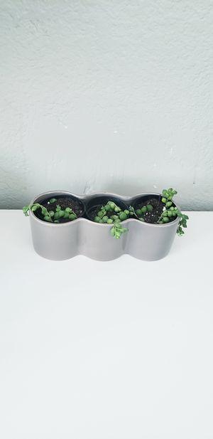 Live string of pearls ceramic succulent holder for Sale in Chandler, AZ